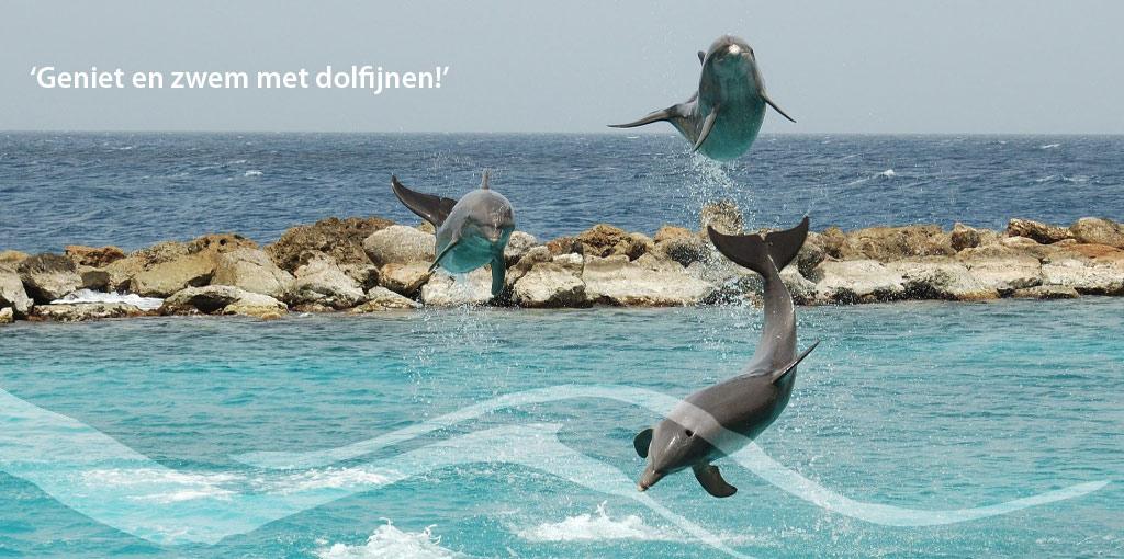 1024x510-Dolfijnen
